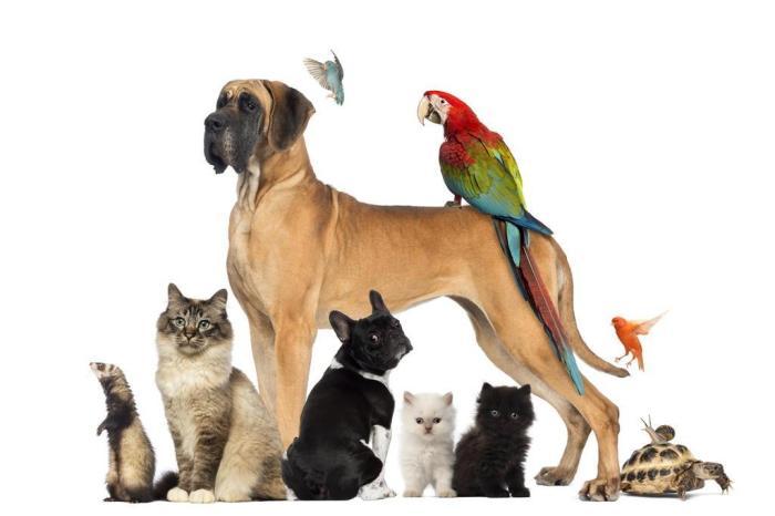 Curso Tipos de animais de companhia e suas doenças - 25h - 5 semanas